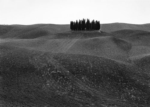 "Clump Of Trees, Tuscany, Italy Archival Inkjet Print 17 X 22"", Edition Of 25 (other Sizes Available)"