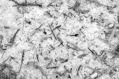 """Corn Debris On Snow Archival Inkjet Print 17 X 22"""", Edition Of 25 (other Sizes Available)"""