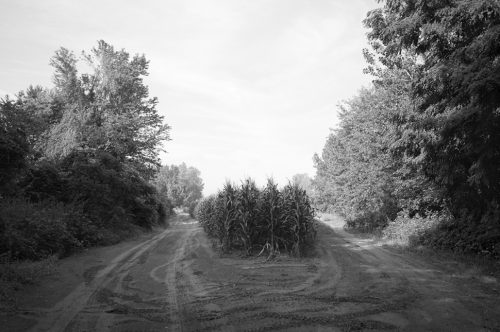 """Corn At A Fork In The Road Archival Inkjet Print 17 X 22"""", Edition Of 25 (other Sizes Available)"""