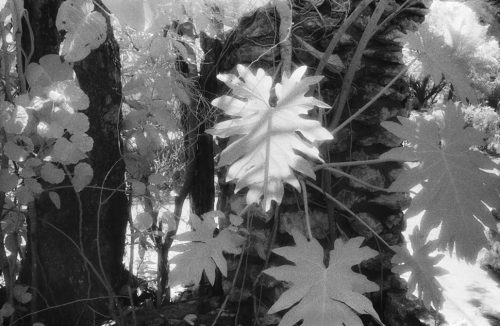 "Flora, Negril, Jamaica Archival Inkjet Print 17 X 22"", Edition Of 25 (other Sizes Available)"