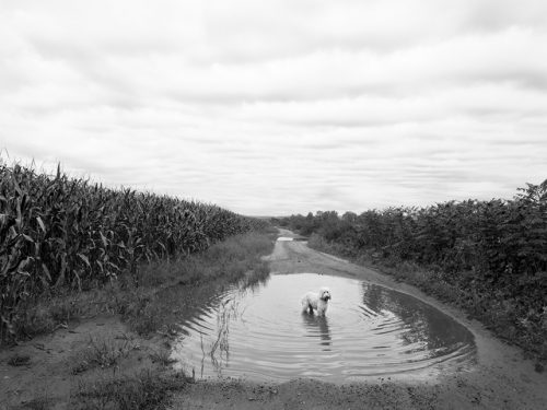 """Milo Standing In A Puddle Archival Inkjet Print 17 X 22"""", Edition Of 25 (other Sizes Available)"""
