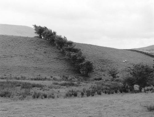 "Sheep And Trees, Ireland Archival Inkjet Print 17 X 22"", Edition Of 25 (other Sizes Available)"