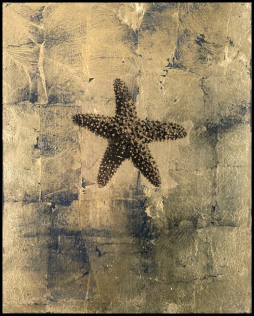 Starfish Polaroid Emulsion Over Gold Leaf And Clay On Board, 10 X 8""