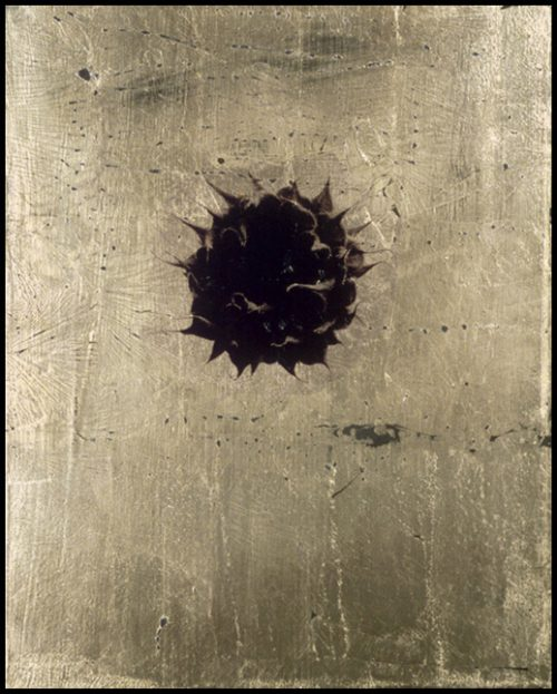 Sunflower 2 Polaroid Emulsion Over Gold Leaf And Clay On Board, 10 X 8""