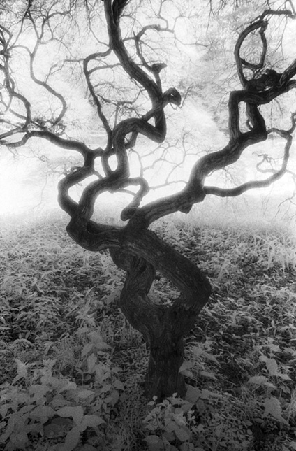 "Tree, New Jersey Archival Inkjet Print 22 X 17"", Edition Of 25 (other Sizes Available)"
