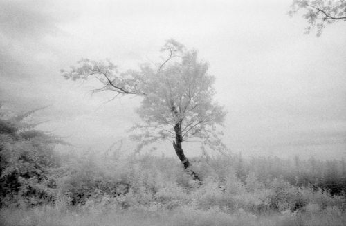 "Tree And Mist, East Hampton, NY Archival Inkjet Print 17 X 22"", Edition Of 25 (other Sizes Available)"