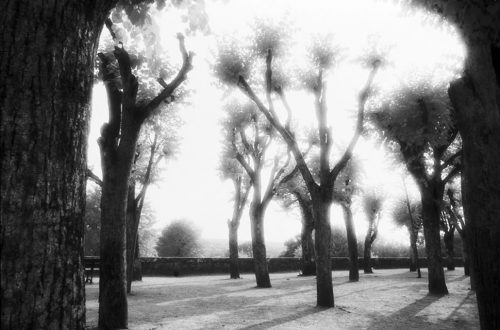 "Trees, Avalon, France Archival Inkjet Print 17 X 22"", Edition Of 25 (other Sizes Available)"
