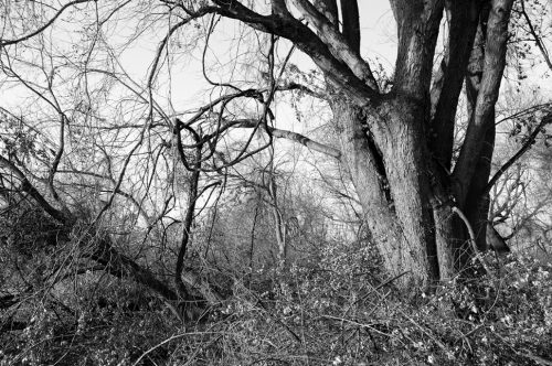 """Trees And Vines #178 Archival Inkjet Print 17 X 22"""", Edition Of 25 (other Sizes Available)"""