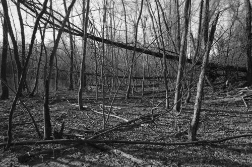 """Trees And Vines #21 Archival Inkjet Print 17 X 22"""", Edition Of 25 (other Sizes Available)"""