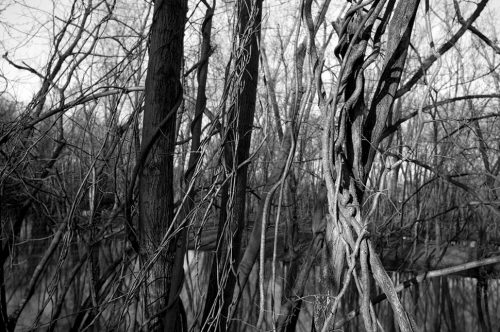 """Trees And Vines #26 Archival Inkjet Print 17 X 22"""", Edition Of 25 (other Sizes Available)"""