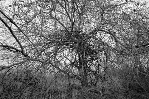 """Trees And Vines #40 Archival Inkjet Print 17 X 22"""", Edition Of 25 (other Sizes Available)"""