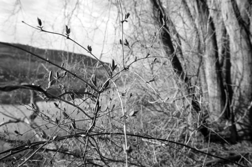 """Trees And Vines #90 Archival Inkjet Print 17 X 22"""", Edition Of 25 (other Sizes Available)"""